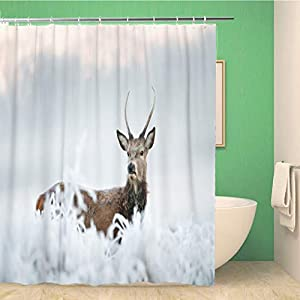 rouihot 66x72 Inches Shower Curtain Young Red Deer Buck Standing Deep in The Frosted Grass On an Early Cold Winter Morning Waterproof Polyester Fabric Bath Bathroom Curtain Set with Hooks