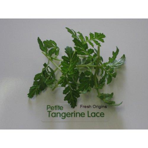 Petite Greens - Tangerine Lace - 4 x 4 oz