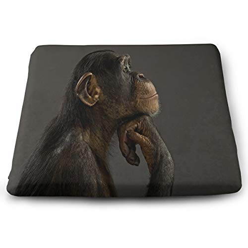 Ladninag Seat Cushion Thinking Monkey Animal Chair Cushion Offices Butt Chair Pads for Cars/Outdoors/Indoor/Kitchens/Wheelchairs