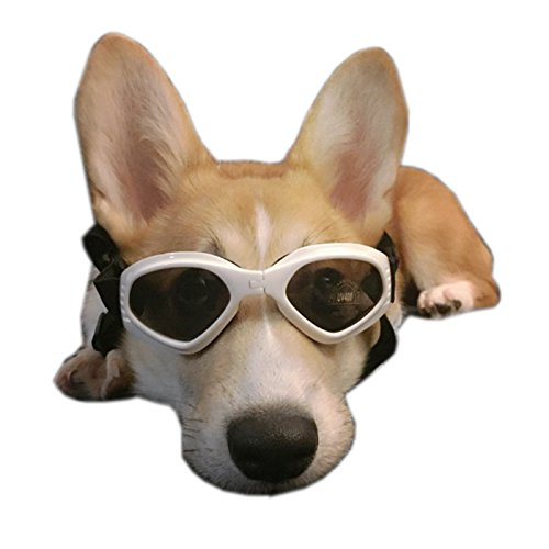 Alfie Pet by Petoga Couture - Larry Sun Glasses for Dogs and Cats - Color: White, Size: Small