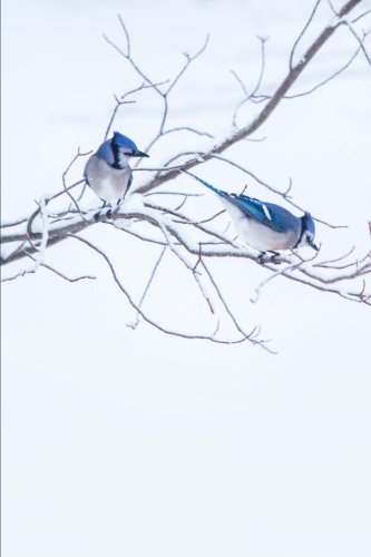 - Blue Jays Bird Watching Journal To Write In Notes: (Notebook, Diary, Blank Book) (Seasonal Winter Wildlife Photo Journals Notebooks Diaries)