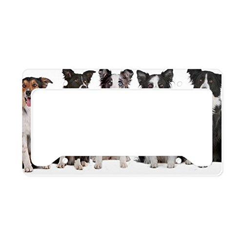 Border Collie Plate - 4
