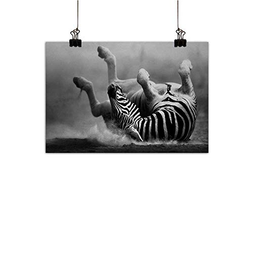 Anzhutwelve Africa Modern Oil Paintings Zebra Rolling in The Dust Artistic Savage Animal Mammal Activity Eco Photo Canvas Wall Art Black and White 24