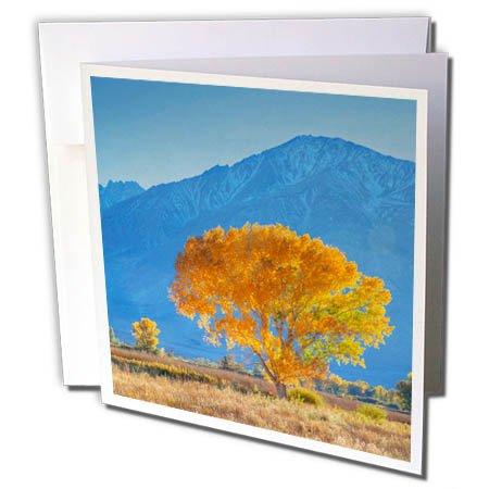 Sierra Nevada Mountain Range (3dRose Danita Delimont - Trees - California, Sierra Nevada Range. Cottonwood tree in Owens Valley. - 6 Greeting Cards with envelopes (gc_258827_1))