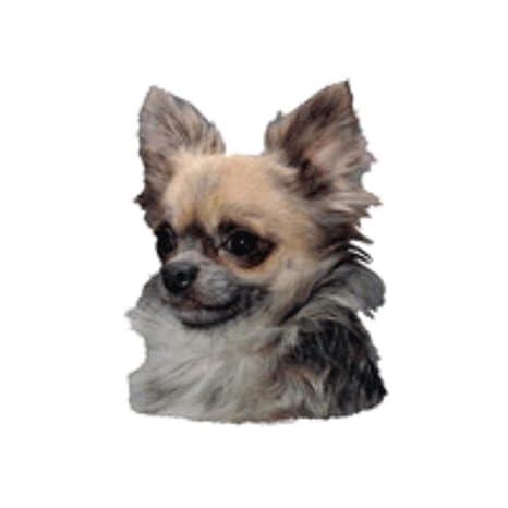 World Stickers schwandt doméstica Animales requisitos 12208 Pegatinas 4 unidades aprox. 80 x 80 mm para warnschild Caniche Blanco: Amazon.es: Productos para ...