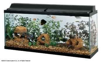 All Glass Aquarium AAG21248 Fluorescent Deluxe Hood, -