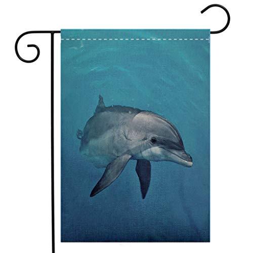 - BEIVIVI Creative Home Garden Flag Curious Female Atlantic Bottlenose Dolphin Welcome House Flag for Patio Lawn Outdoor Home Decor
