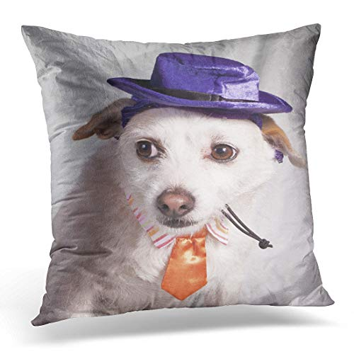 Emvency Throw Pillow Cover Angry Orange Dog Chihuahua in Halloween Costume Purple Boss Decorative Pillow Case Home Decor Square 18