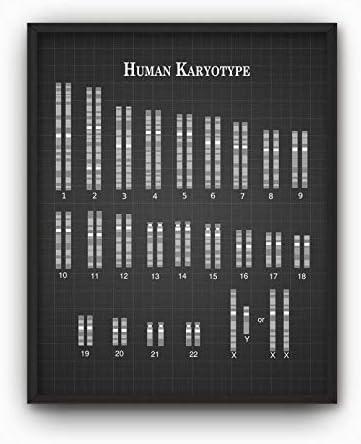 Rac76yd Humana Karyotype Print X Y Cromosomas Código Genético ...
