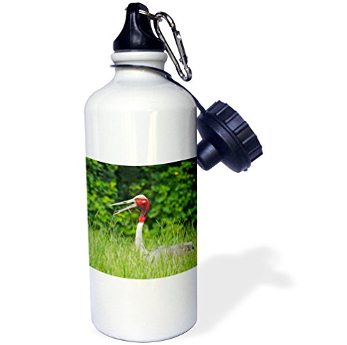 Danita Delimont - Birds - Indian Saras Crane at the nest, Keoladeo National Park, India. - 21 oz Sports Water Bottle (Keoladeo National Park)