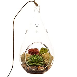Bliss Gardens Succulent Terrarium With Moss And River Rocks 7 Teardrop Glass