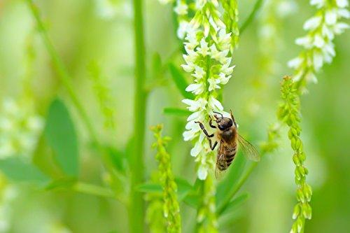 Southwest Semi-Arid Steppe Honey Bee Pasture Blend (2000 sq ft)