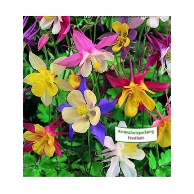 Humany flowerseeds- Rarities50 Pieces Columbine Flower Seeds Violet Tint Columbine Seed Hardy Perennial Bee-Friendly Flowers for Patio/Balcony/Garden : Garden & Outdoor