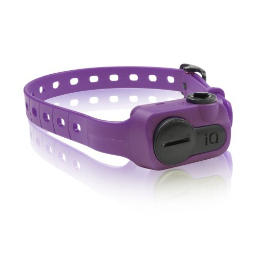 Dogtra iQ No Bark Collar Purple (Set of 3) by Dogtra