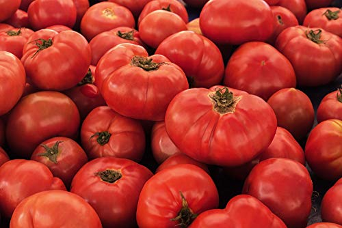 VR Moscow Tomato Seeds - Non-GMO - 0.5 grams, approximately 175 seeds