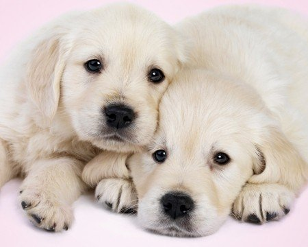 Puppy Love Cute Dogs Animal Photography Poster Print 16 by -