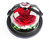 MAMS Preserved Real Rose with Fallen Petals in Glass Cloche Dome with Black Wood Base-Best Gift Jar