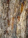 Acacia Bark, Powder - Wildcrafted - Acacia arabica (454g = One Pound) Brand: Herbies Herbs