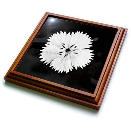 3dRose Stamp City - flowers - Black and white macro photograph of a dainty white dianthus flower. - 8x8 Trivet with 6x6 ceramic tile - Flower White Trivet
