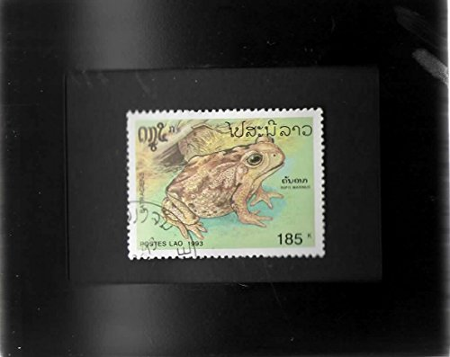 Tchotchke Framed Stamp Art - Amphibians - Cane Toad