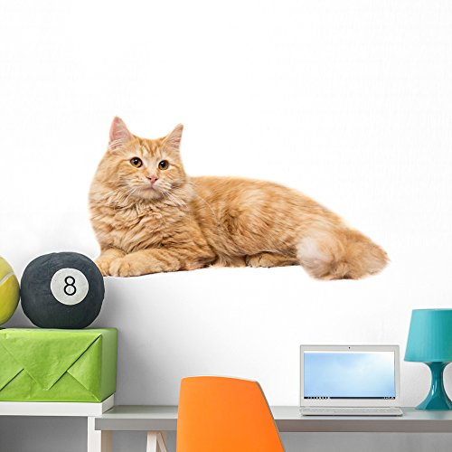 Long-haired Orange Cat White Wall Decal by Wallmonkeys Peel and Stick Graphic (36 in W x 24 in H) (Lying Down Cat)