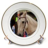 3dRose Susans Zoo Crew Animal - palimino Horse Equine Head in Halter Animal - 8 inch Porcelain Plate (cp_294160_1)