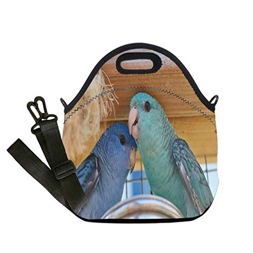 Insulated Lunch Bag, Reusable Outdoor Travel Picnic School Family portrait of blue and turquoise Barred parakeet close up Student Company School, Multicolor, Adults and Children