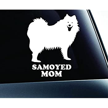 Funny Animal Pet Dog Cat Is My Co Pilot Sticker Decal For Car Auto Bumper Window