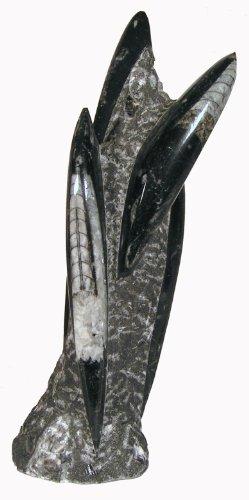 - Orthoceras/Fossils of Tibet