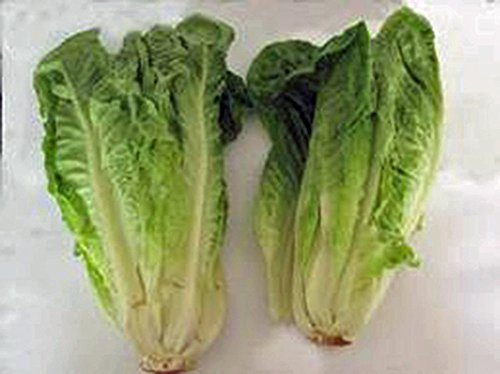 - Romaine Lettuce Seed, Paris Island, Heirloom, Organic, Non Gmo, 500 Seeds,