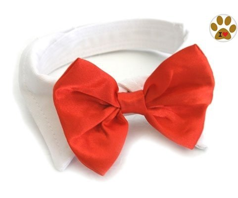 Red Satin Formal Bow Tie and Collar with Button Pin- Dog Sizes XS thru 3XL (X-Small- fits Neck 7