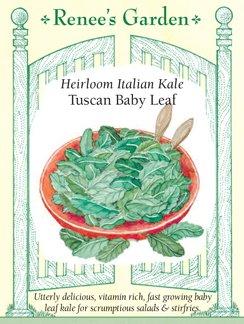 Kale, Italian,