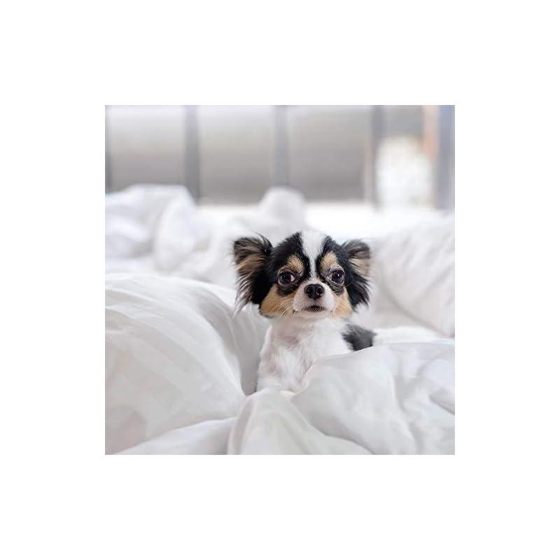 Linen Market Premium Down Alternative Farmhouse Dreams Reversible Comforter Sets, King/California King, Navy