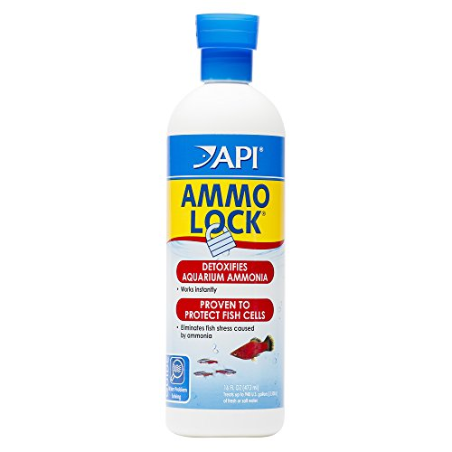 API AMMO-LOCK Freshwater and Saltwater Aquarium Ammonia Detoxifier 16-Ounce Bottle from API