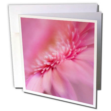 3dRose Danita Delimont - Flowers - USA, Maine, Harpswell. Pink gerbera daisy abstract. - 12 Greeting Cards with envelopes (gc_259386_2)