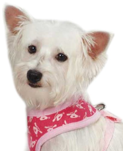 DogIsGood Bolo Pet Harness, Small, Raspberry Sorbet
