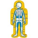Carson Dellosa Child-Size Human Body Bulletin Board