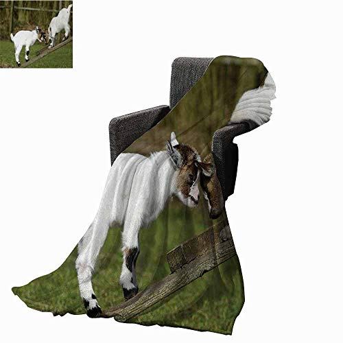 Brookstone Bench - vanfan-home Animal Beach Blanket,Two Cute Little Baby Goats on a Bench Fighting with Their Horns Picture Image Cozy and Durable Fabric-Machine Washable (80