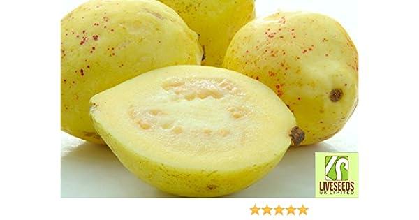 Liveseeds - Yellow Sweet Guava Fruit 10 Finest Seeds