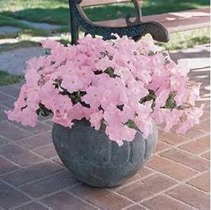 50 Pcs / Bag, Garden Petunia Petals Flower Seeds For Garden Petunia Semillas De Petunias