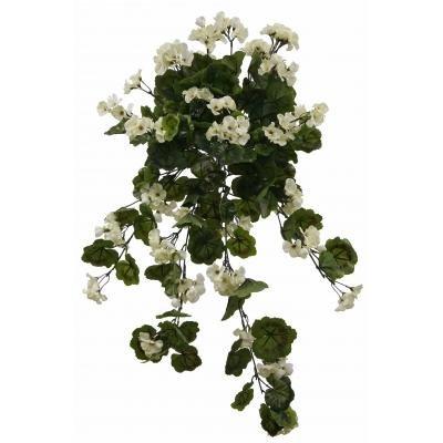Creamy White Outdoor Rated Geranium Hanging Bush