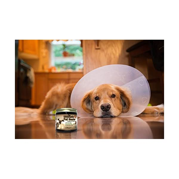 (470ml) – Alpha Pet Zone Coconut Oil for Dogs, Treatment for Itchy Skin, Dry Elbows, Paws and Nose Click on image for further info. 5