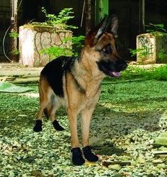 Ultra Paws Xtreme Kevlar Dog Boots - Set of 4 - Medium 2 3/4'' Paw Width