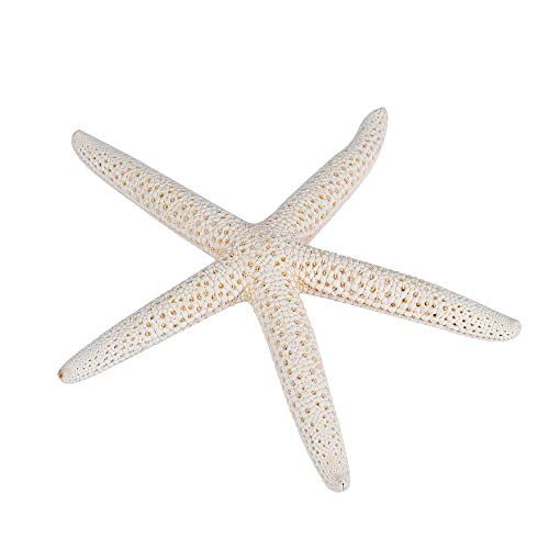 Fan-Ling 1 Piece 10-12cm White Natural Finger Sea Star,Wedding Home Decor,Craft Project