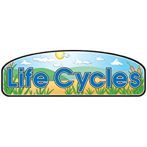 Carson-Dellosa Publishing - Life Cycle Posters - Set of 4