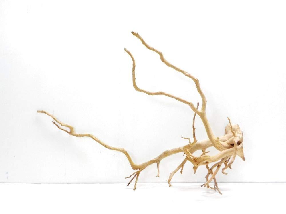 AQUARISTIKWELT24 7322 XXXL Moorkien Root Dimensions 85 x 35 x 63 cm Aquarium Root Wood Decoration