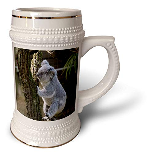(3dRose Sven Herkenrath Animal - Funny Koala Bear in the Free Nature Zoo Wildlife - 22oz Stein Mug (stn_311453_1))