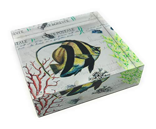 (Value Arts Tropical Angel Fish Glass Paperweight, 3 inches Square)