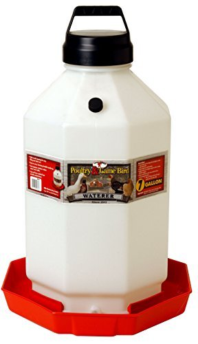 MIller Little Giant 7 Gallon Poultry Waterer Fount - The Best