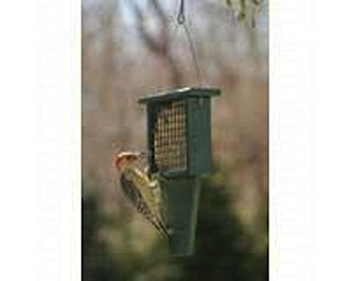 Suet Bird Feeder - Suet Feeder With Tail Prop Hunter Green